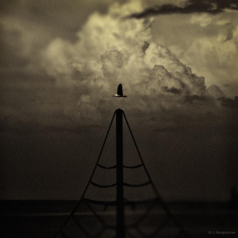 cuervoblanco